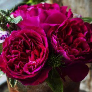 роза, питомник Элитгарден