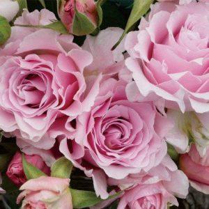 Розы японской селекции