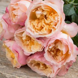 Розы срезочные, пионовидные, сорта Премиум класса
