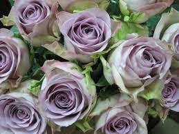 Предлагаем качественные саженцы роз с доставкой по Украине.