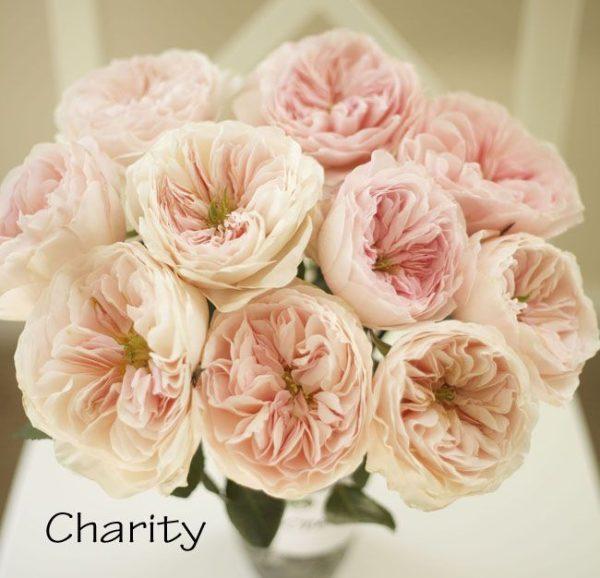 Роза Charity (Чарити)
