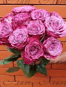 Роза Princess Tamako (Принцесса Тамако)