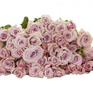 Розы Bellalinda Lilac (Беллалинда Лайлак)